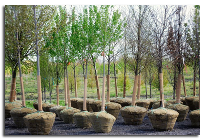 Poul S Tree Nursery Why From Us