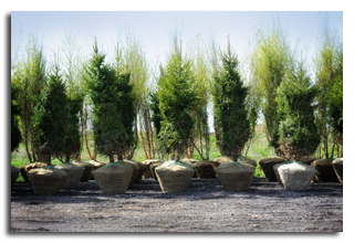 The Advantages Of A Local Tree Nursery Operation