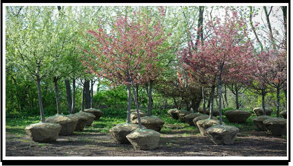 Tree Nursery Tree Nursery Near Me Poul S Landscaping